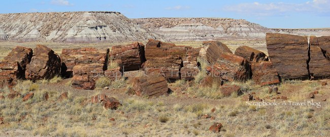Giant Petrified Tree at Petrified Forest National Park Arizona