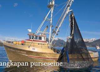 Pola perjuangan penangkapan ikan pelagis kecil d Kabar Terbaru- PELUANG USAHA PURSE SEINE