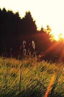 اجمل صور مناظر طبيعية خلابة و خلفيات طبيعية روعة ، مناظر طبيعية  ورود