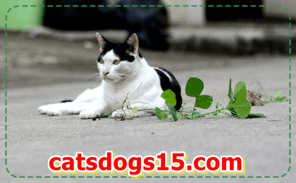 Suggestions for cats a clean home and healthful Cat
