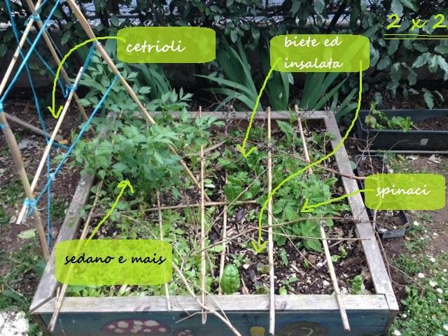 orto quadrato a maggio con insalate
