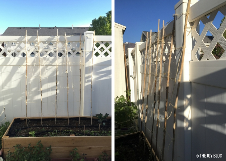 Super Cheap DIY Bamboo Bean Trellis // www.thejoyblog.net