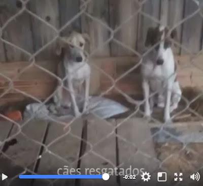 Ambiental apreende armas e resgata cães utilizados para caçar em Itapirapuã Paulista-SP