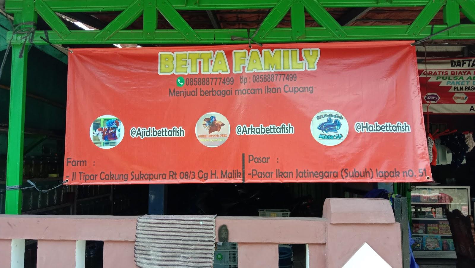 Betta Family