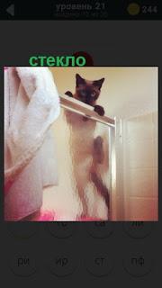 кошка забралась на стеклянную перегородку и смотрит оттуда