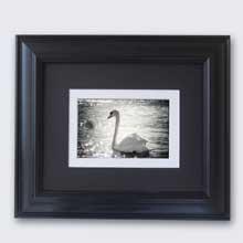 Swan Framed Print, Wall Frame in Port Harcourt, Nigeria