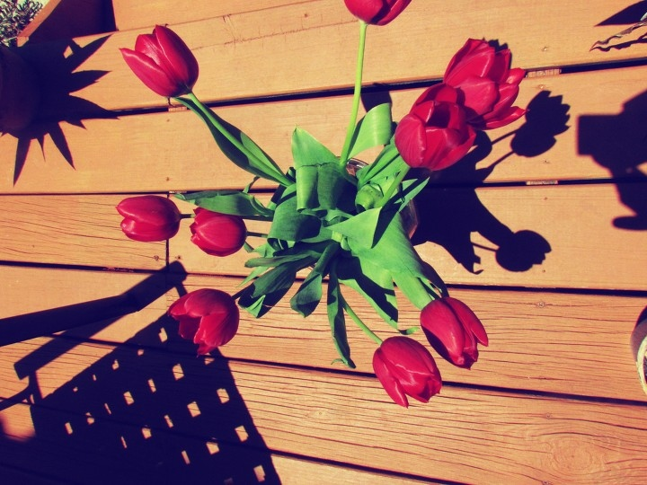 A red tulip floral bouquet on wooden porch in Florida backyard with shadow lights dancing everywhere