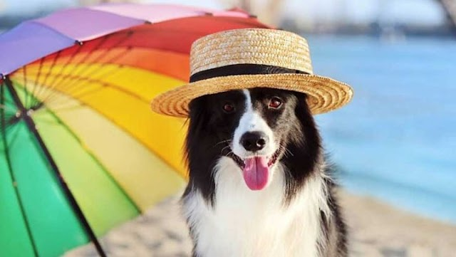 Πώς θα κρατήσετε τον σκύλο σας δροσερό αυτό το καλοκαίρι