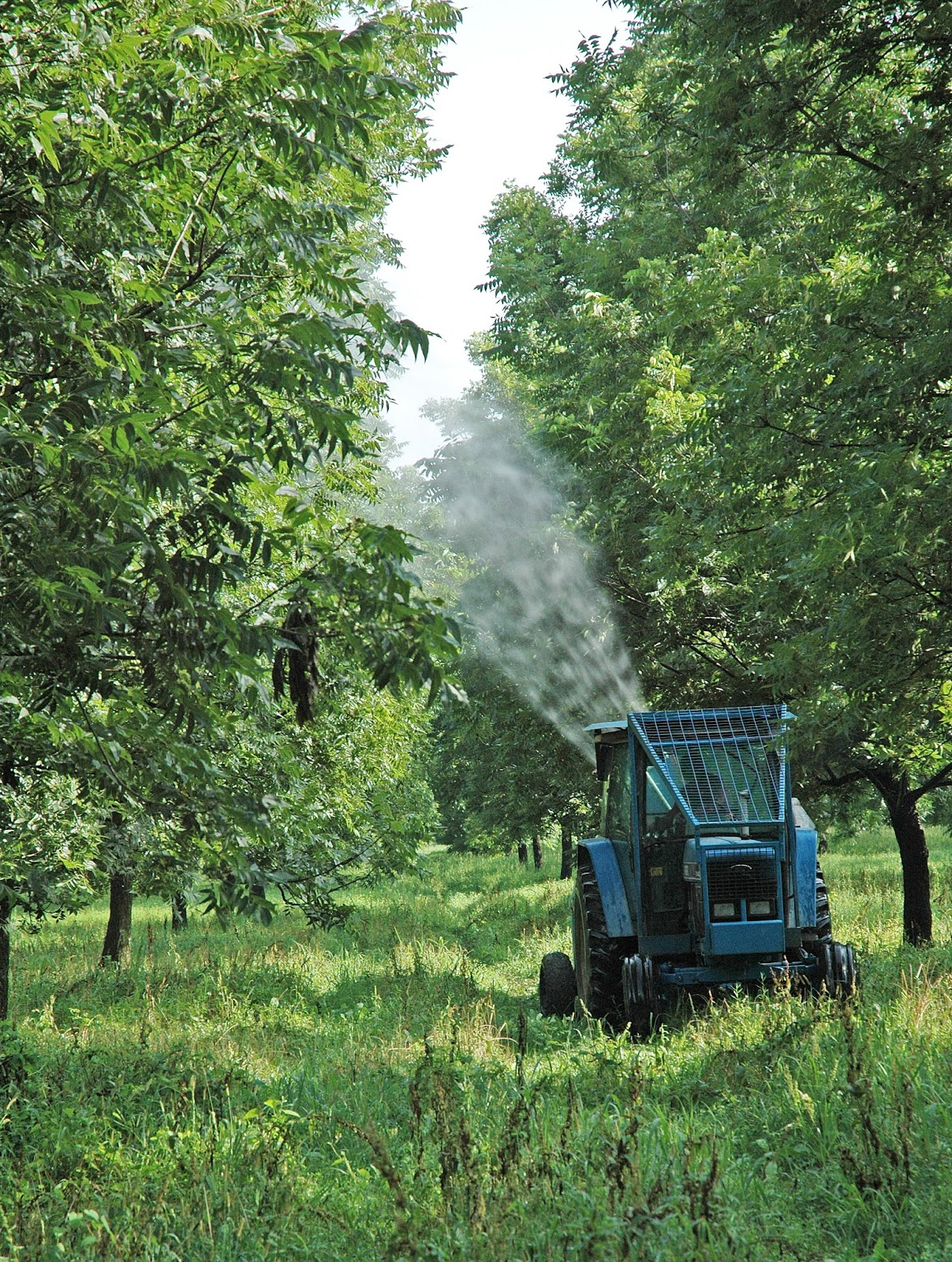 Northern Pecans: Spraying for pecan scab