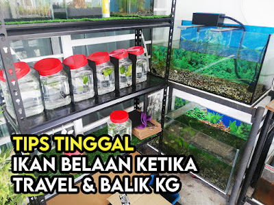 Tips Tinggal Ikan Lama
