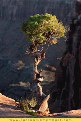 Juniper Tree on Canyonlands 18