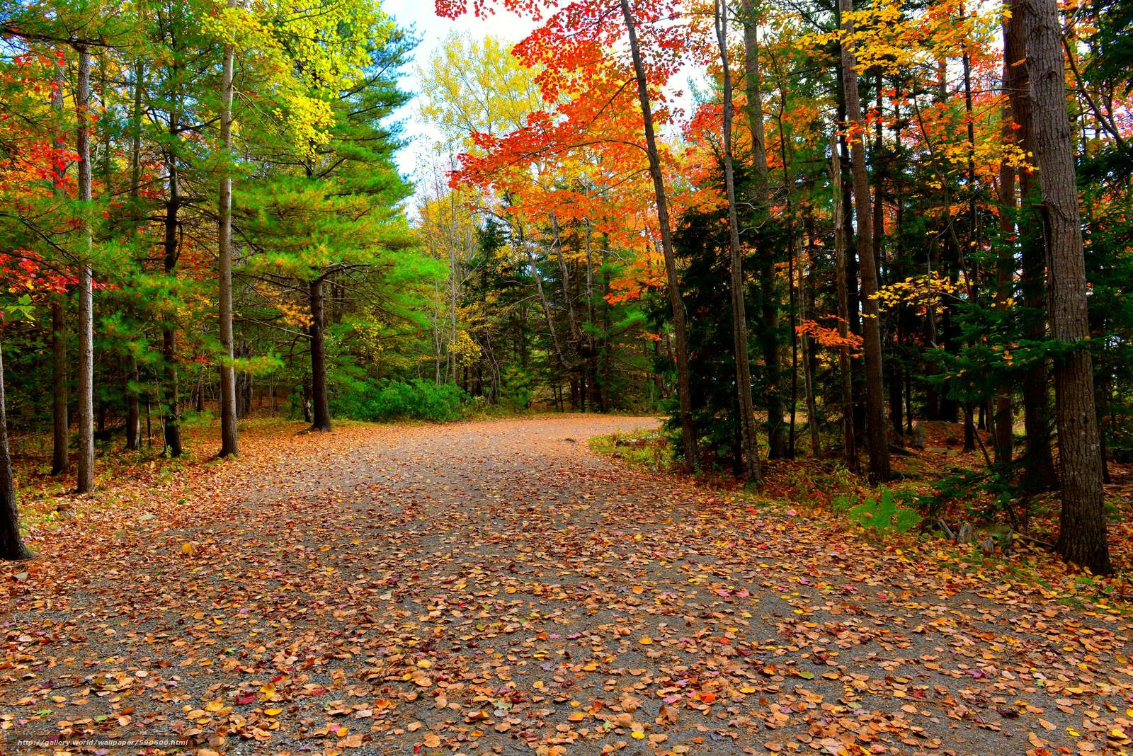 Acadia National Park, autumn, road, trees free Download wallpapers