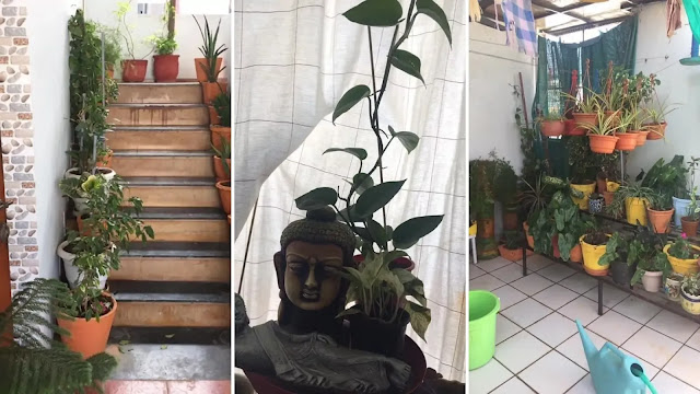pent house garden of ankur sethi