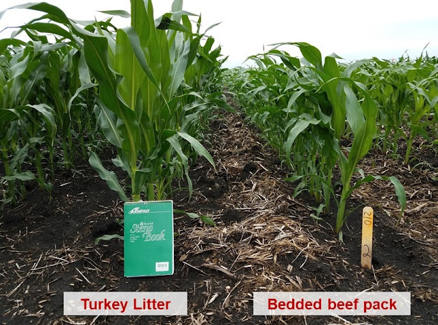 bedded beef pack vs turkey litter manure