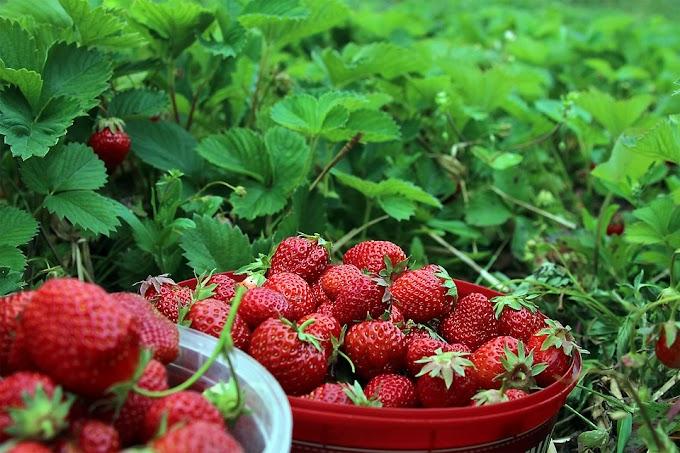 Cómo vender más si eres una empresa de alimentos orgánicos