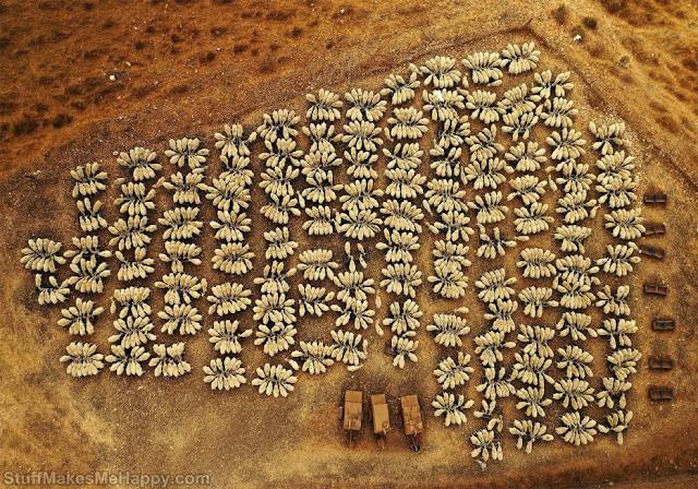 6. A flock of sheep. (Photo by Yoel Robert Assiag