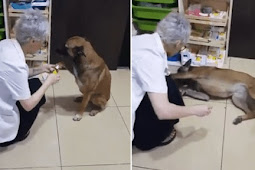 Stray dog walks to pharmacy and asks for help her injured paw
