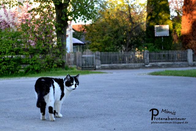 Nachbarskater Paul