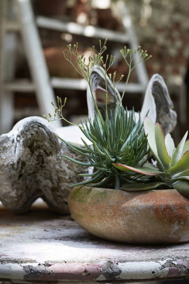 Succulents in aged terracotta planter with giant clam shell in #Frenchgarden #succulents