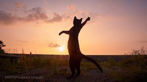外国人「ネコのカッコいいポーズだけを撮影する日本の写真家の作品がすごい」(海外の反応)