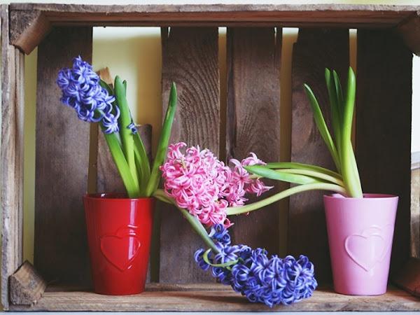 60. Oznaki wiosny - foto galeria.