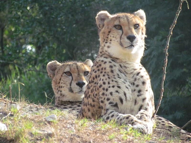कुम्भलगढ़ वन्यजीव अभयारण्य | Kumbhalgarh wildlife sanctuary