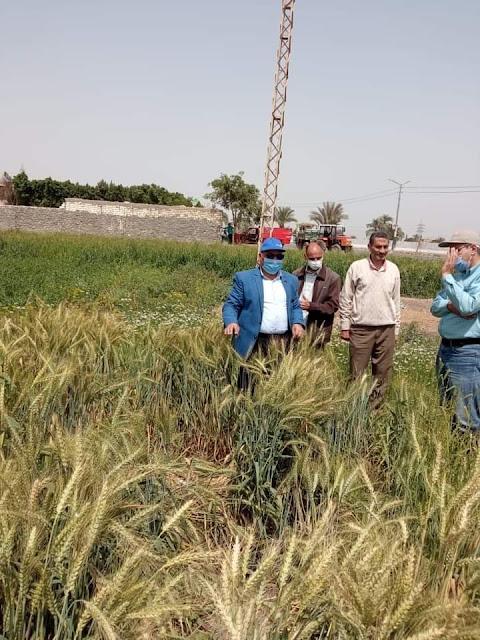 وكيل زراعة الفيوم ووفدالحملة القومية للقمح في جوله تفقدية للوقوف على الحالة العامة للمحصول