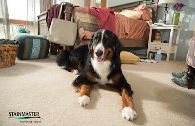 Long haired dog on carpet