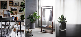 plants, photos on walls and feature wall