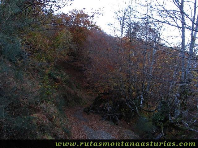 Ruta Víboli Peña Subes y Sen Mulos: Bosque