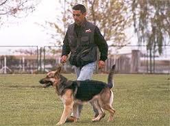 Es importante que el perro se siente aceptado y amado, y una parte de la familia y del mismo modo el propietario debe también tratar al perro con total afecto y cuidado