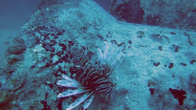 Diving near Key Biscayne