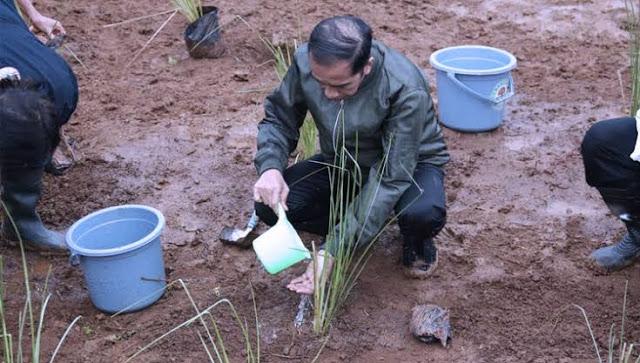 Jokowi Buat Program Cetak Sawah, DPR: Keburu Rakyat Kelaparan