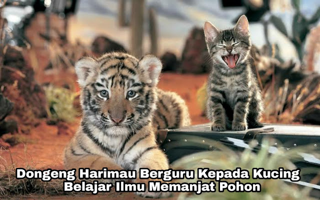 Dongeng Harimau Berguru pada Kucing - Belajar Ilmu Memanjat Pohon