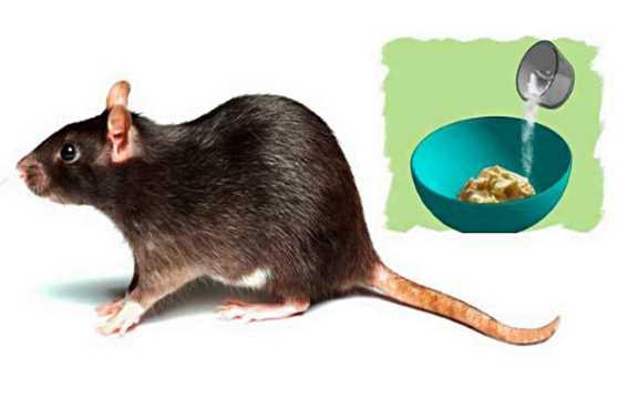 Solusi Mengusir Tikus di Rumah