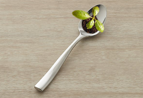 image of a teaspoon with a baby tree growing out of a bit of dirt sitting in the hollow of the spoon