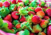 Strawberry Picking in Jagna, Bohol