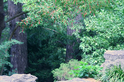 Nature walk in Royal Botanical Garden - Where would the trail take you?! :: All Pretty Things