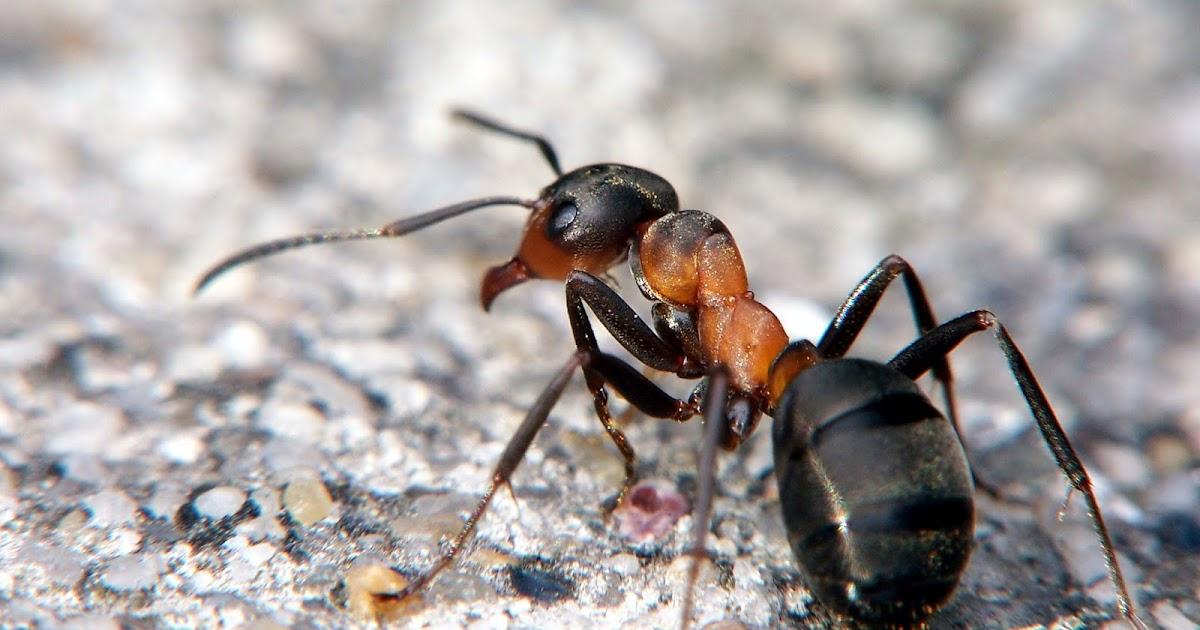 Vento largo: il destino delle formiche