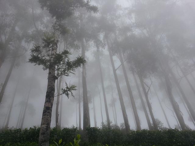 Cyclone Nisarga Path ,Status and Alert