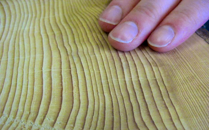 Touching the tree rings