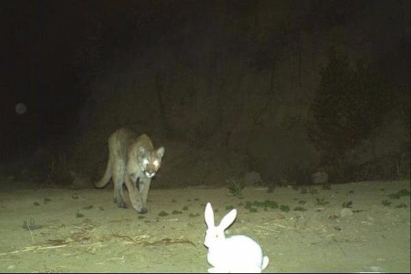 A-Poor-Bunny-Rabbit