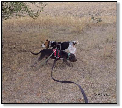 Zwei Hunde an der Leine. Das kann schon mal Leinengewirr geben.