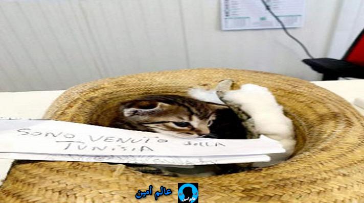 """شغلت الإعلام الايطالي قطة تونسية """" تحرق """" إلى لامبادوزا مع شاب والسلطات تضعها في الحجر !"""