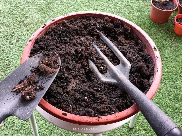 tips tanam ketumbar, anak pokok ketumbar, benih ketumbar, cilantro grow, cilantro plant, baja pokok ketumbar, cilantro gardening,