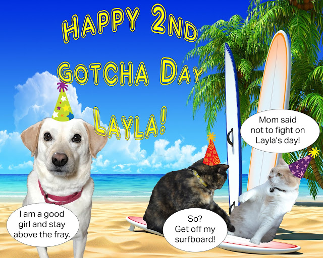 Happy Gotcha Day, Layla!