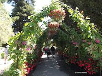 Flower canopy over path - Christchurch Botanic Gardens, New Zealand