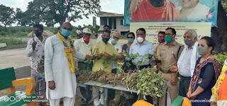 पतंजलि योगपीठ ने हजारों गिलोय की कलम वितरण एवं रोपण के साथ जड़ी बूटी दिवस मनाया
