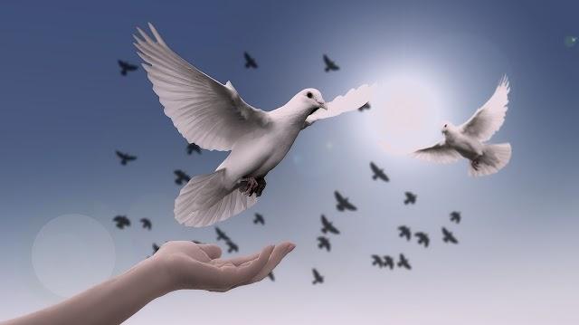 Paz y amor: la conciencia humana.
