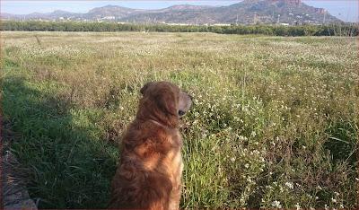 Apelsinblomshund njuter under en solig februaripromenad